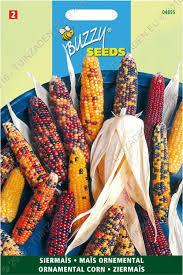 ornamental corn ornamental corn flower seeds tuinzaden eu