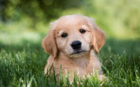 sad puppy wallpaper hd download for desktop and mobile