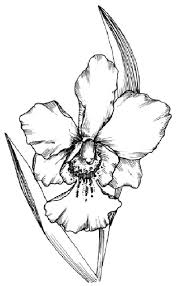 Black Orchid Flower Orchid Coloring Page Orchid Flower Coloring Pages With Flower