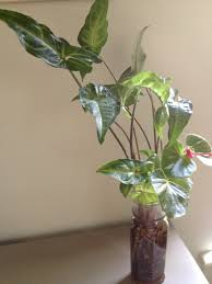 help aging parents leafy easy care houseplants u2013 alive and life