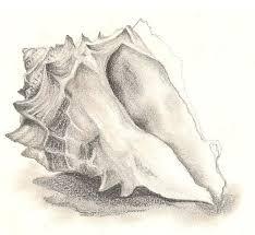 best 25 seashell drawings ideas on pinterest sea drawing