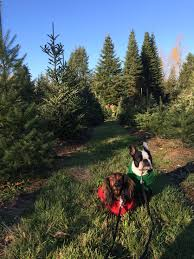 8 tips for taking your dog to the christmas tree farm rover com