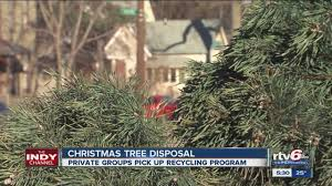 a guide to getting rid of your christmas tree in indianapolis