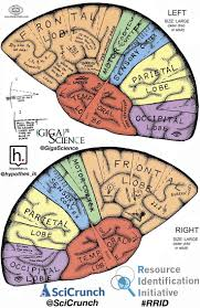 brain anatomy coloring book 10 best 3d brain images on pinterest high schools and paper