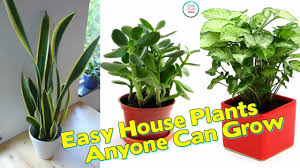 easy plants here are 20 super easy house plants anyone can grow youtube