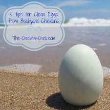 8 tips for clean eggs from backyard chickens backyards the nest