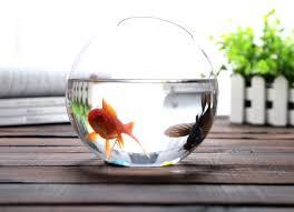 Ikea Vases Wedding Fish Bowls Vases U2013 Www Affirmingbeliefs Com