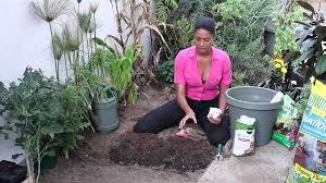 how to grow ornamental corn the chef s garden