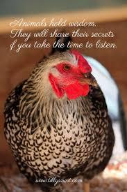 best backyard chickens 12 best sayings from tilly u0027s nest images on pinterest backyard