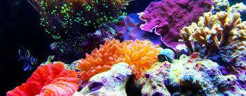 Home Aquarium by Complete Aquarium Home