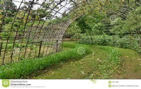 Bamboo Backyard Vegetable Bamboo And Tunnel Bamboo Stock Image Image 44321173