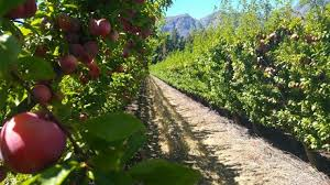 sending fruit south africa it s a time to be sending fruit