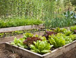 can you plant any flowers or vegetables in january