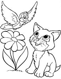 cute cats and bird cats pinterest bird