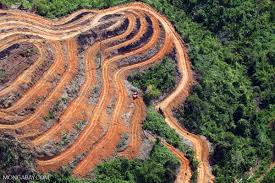 It U0027s A Cover Up by A Major Concern U0027 Plantation Driven Deforestation Ramps Up In Borneo