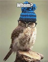 Funny Owl Meme - smart owl memes quickmeme humor pinterest owl memes and