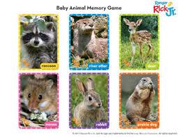 baby animal memory national wildlife federation