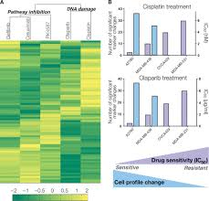 cancer cell profiling by barcoding allows multiplexed protein