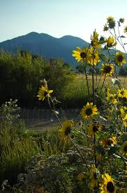 native mexican plants wonderful world of native plants u2013 easter flowers the taos news