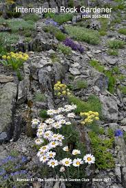 Scottish Rock Garden Forum International Rock Gardener E Magazine Forum Topic