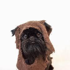 Ewok Dog Halloween Costume 52 Pets Instagram Images Instagram Animals