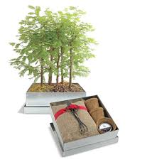 gift ideas for gardeners plants home outdoor decoration