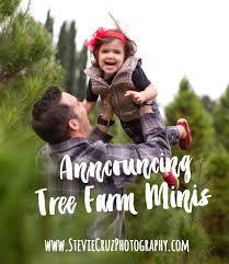 christmas tree minis in orange county 2016 orange county newborn