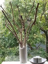 silver birch logs decorative accessories gumtree australia