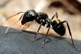 ants lovetoknow