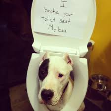 Dog Shaming Meme - the 19 most popular dog shaming shenanigans in the past year barkpost