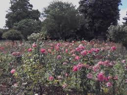 Geelong Botanic Gardens by Portland Botanical Gardens U2013 Western District Families