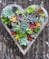 succulent planters diy small heart planter living vertical wall planter planters