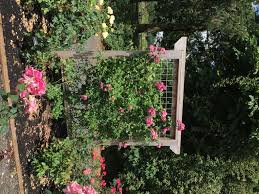 rose growing care how to articles pick a proper trellis in addition to ensuring the size of the trellis is correct it is also important to use a trellis made from material which can withstand the strain of