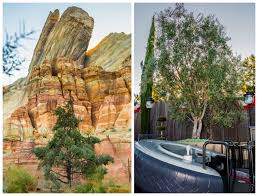 Barnhill Rock Garden by Plants Of Disneyland Resort Plant Disney Magic At Home U2013 Your So