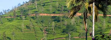 luxury tea country holidays in sri lanka boutique hotels in sri