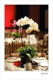 orchid centerpiece potted plant wedding reception flowers orchid wedding