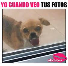 Memes De Chihuahua - 20 divertidos memes de perros que te harán llorar de risa memes