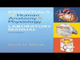 Pearson Anatomy And Physiology Lab Manual Essentials Of Human Anatomy And Physiology Laboratory Manual