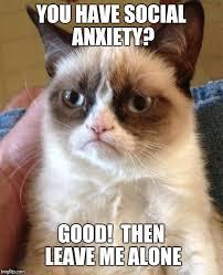 Anxiety Cat Memes - grumpy cat meme imgflip
