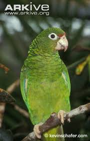 amazon black friday bird cages puerto rican amazon videos photos and facts amazona vittata