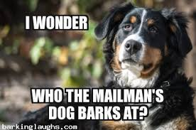 Dog Barking Meme - 13 menacing cute dog memes grumpy dog and more barking laughs