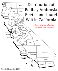 Ucr Campus Map Cisr Redbay Ambrosia Beetle And Laurel Wilt