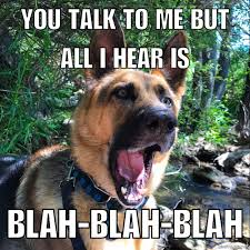 20 german shepherd memes for any dog lover american kennel club