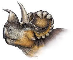 introducing wendiceratops david evans lab