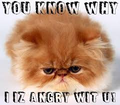 Persian Cat Meme - pin by pest control on funny cat memes pinterest funny cat