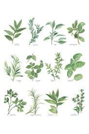 herb chart herb chart i canvas print by chris paschke icanvas