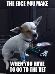 Dog At Vet Meme - chihuahua imgflip