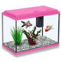 aquarium fish in delhi manufacturers and suppliers india