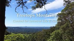 sydney the hills treetops sydney treetops accommodation montville romantic rainforet and seaview