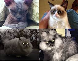 Colonel Meow Memes - sinister cat grumpy cat storm cat and colonel meow the four